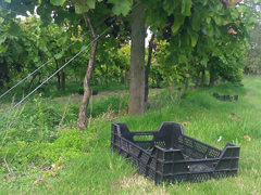 2013-10-10 14.06.50 Harvest Crates Highdown