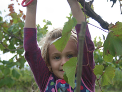 2013-10-13 Pebblebed 267 Little Girl Picking