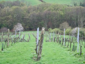 Davenport's Limney Vineyard