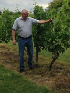 Jed Explains the Vine Growing Year