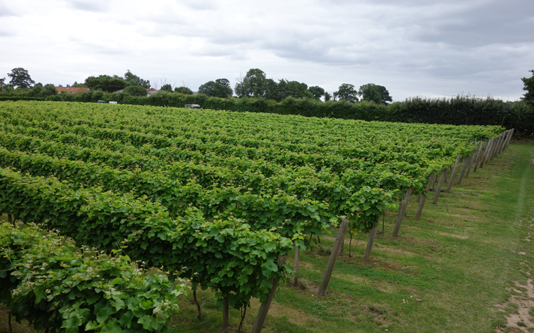 Norfolk's Winbirri Vineyard