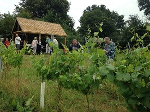 Open day at Forty Hall Vineyard