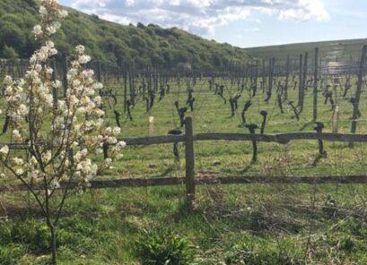 Breaky Bottom Vineyard