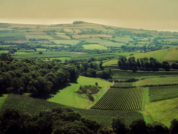 Bride Valley vineyard