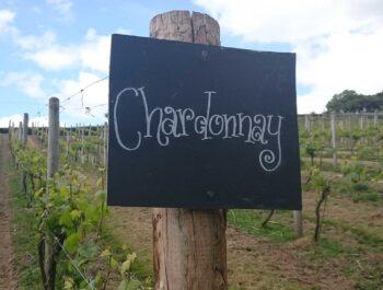 Castlewood Vineyard on the Devon / Dorset Border on Wine Cellar Door