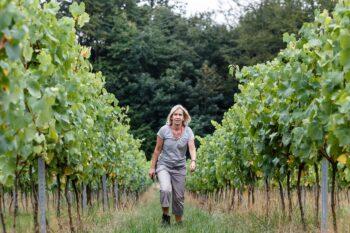 Forty Hall Community Vineyard