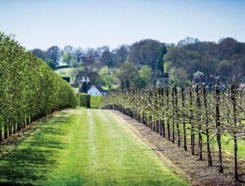 Hush Heath Estate - Vines