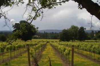 Nutbourne Vineyards