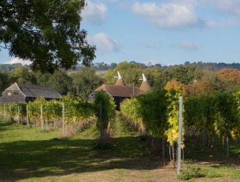 Squerryes Vineyard on Wine Cellar Door