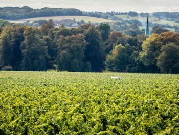 Simpsons Wine Estate