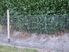 IMG_6968 Jenkyn Place Rabbit Fence
