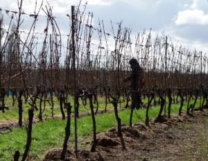 Eglantine Vineyard
