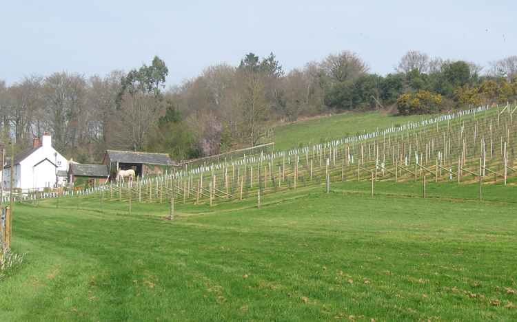 Lily Farm English Vineyard