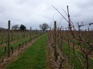 Hazel End Vineyard