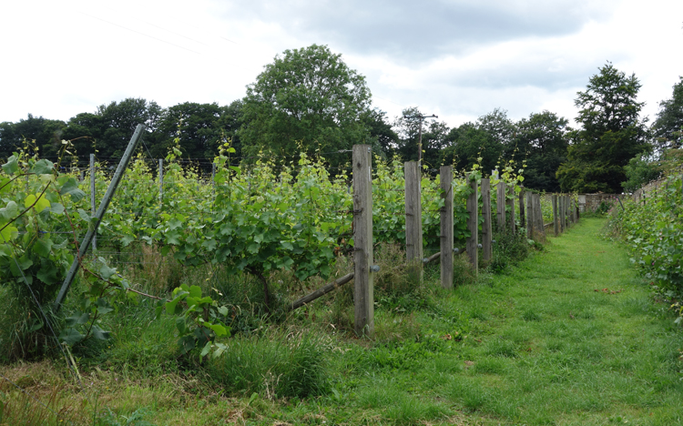 The Walled Vineyard at Renishaw Hall in Yorkshire