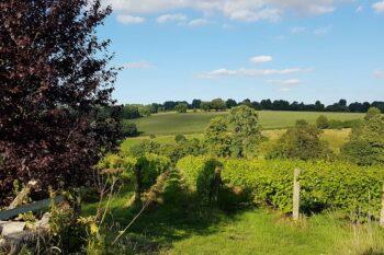 a'Beckett's Vineyard
