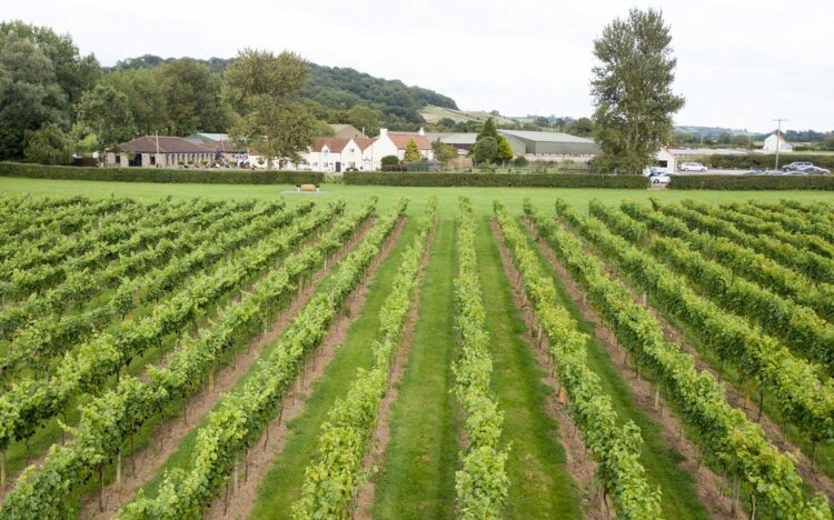 Open Day at Aldwick Court Farm & Vineyard