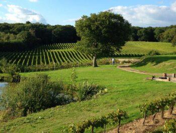 Bluebell Vineyard Estate