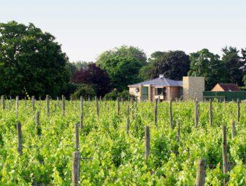 Bothy Vineyard in Oxfordshire on Wine Cellar Door