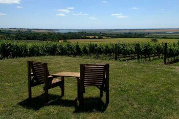 Clayhill Vineyard