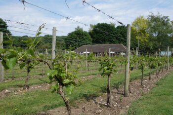 Elham Valley Vineyard