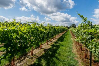 Kingscote Vineyards
