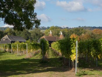 Squerryes Vineyard on Wine Cellar Door