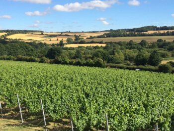Chartham Vineyard, Kent