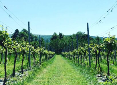 Dunleavy Vineyards