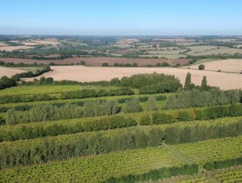Aerial view of Giffords Hall Vineyard