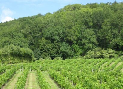 Godstone Vineyards