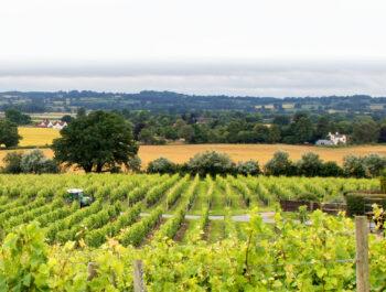 Halfpenny Green Vineyard in Staffordshire