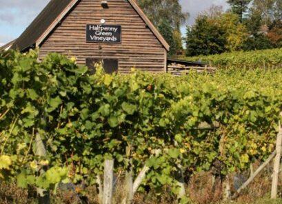 Halfpenny Green Vineyard