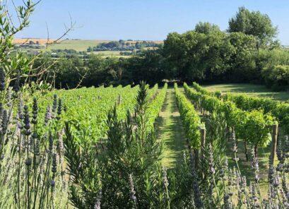 Little Waddon Vineyard