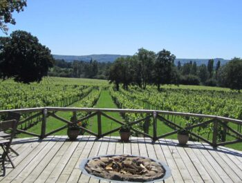 Nutbourne Vineyards on Wine Cellar Door
