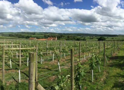 Ryedale Vineyards