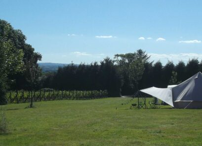 Ten Acres Vineyard