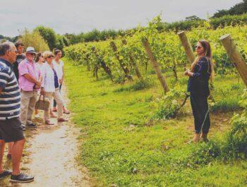 Vineyard tour at Polgoon in Cornwall