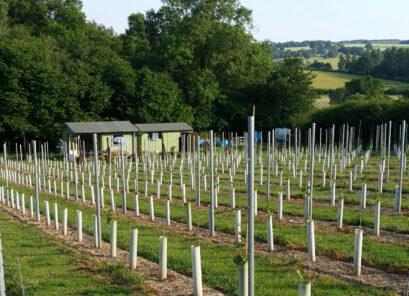 Wildwood Vineyard