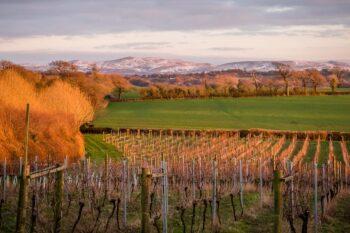 Torview Wines
