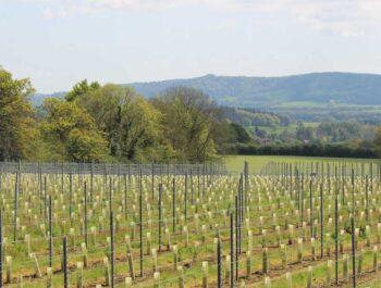 Trotton Estate Vineyard on Wine Cellar Door