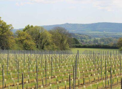 Trotton Estate Vineyards