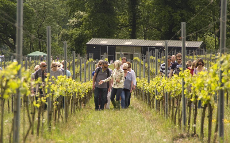 Vineyard Tour & Tasting at Albury Vineyard